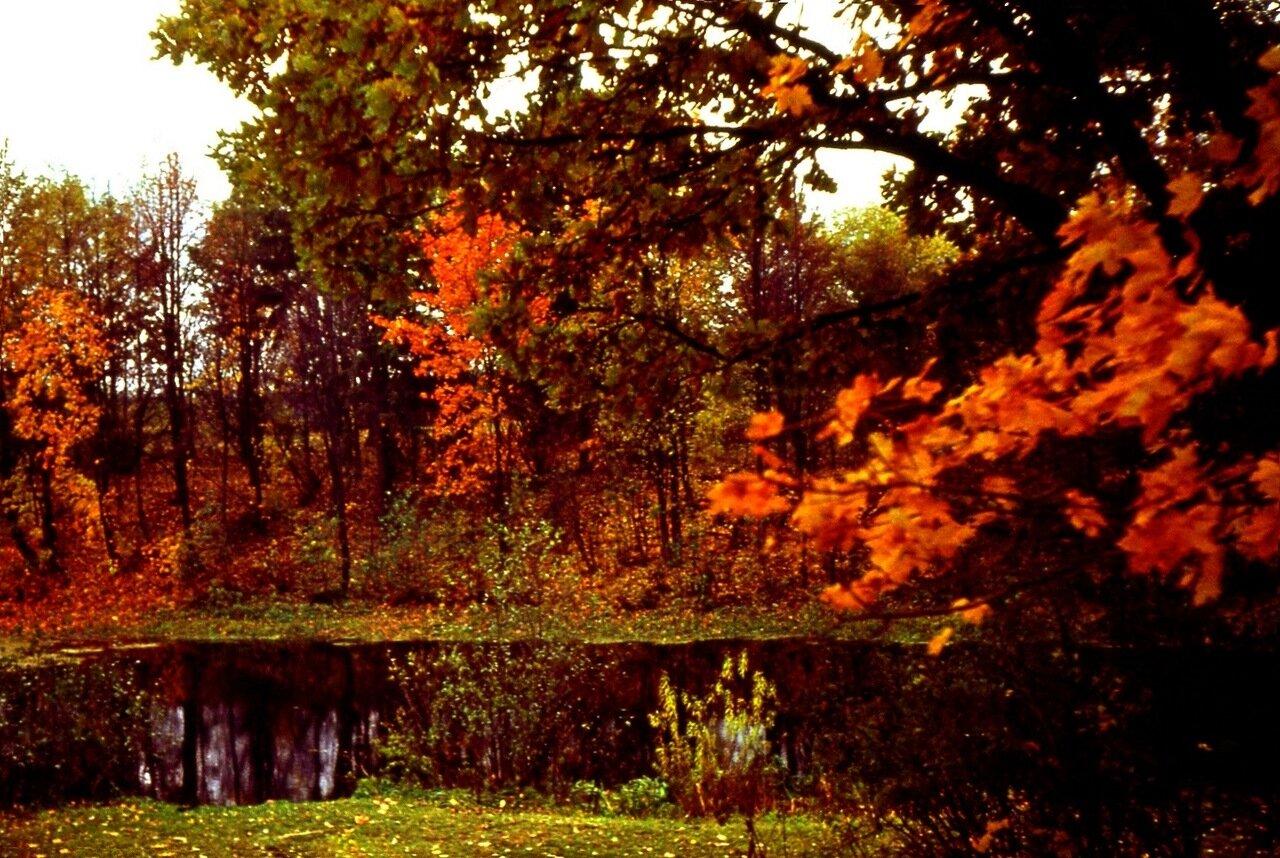 9. Багряная  осень