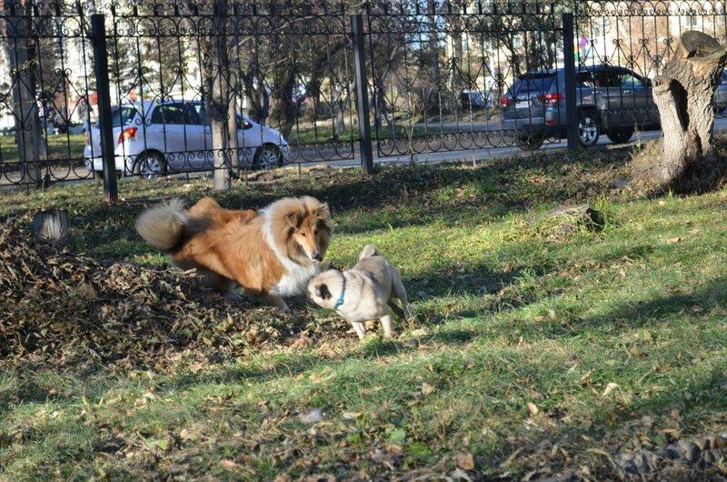 http://img-fotki.yandex.ru/get/9310/134559744.16/0_b3ab5_5f292489_XL.jpg