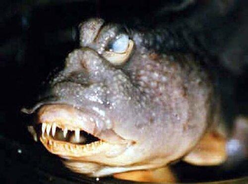 Удивительные и необычные рыбы всего мира
