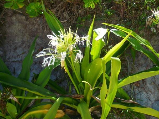 Цветы Таиланда 0 141aea 74613761 orig
