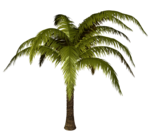 Palms  (10).png