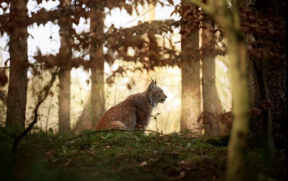 Хранителей леса пост