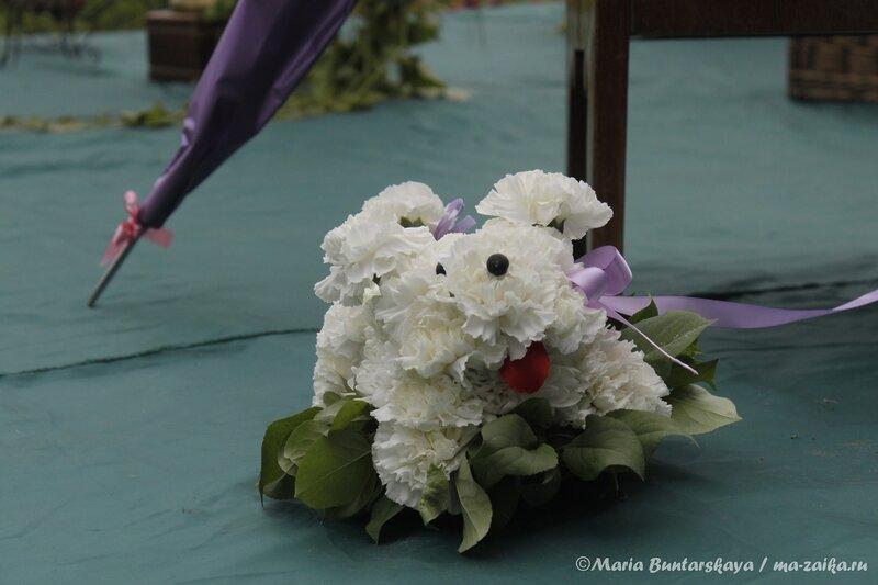Цветущая усадьба Н.Г.Чернышевского. Флордизайн. Саратов, 24 июля 2013 года