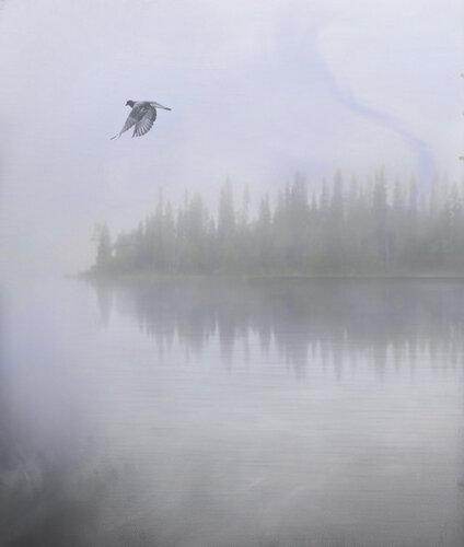 Полет в тумане