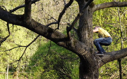 По весне на деревьях появляются мальчишки