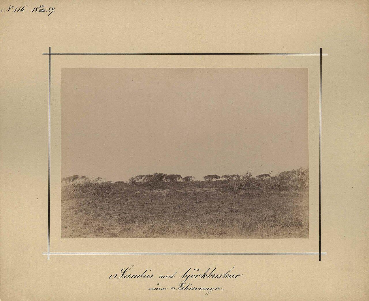 24.8.1889. Чаваньга. Песчаные гряды возле кустов и берез