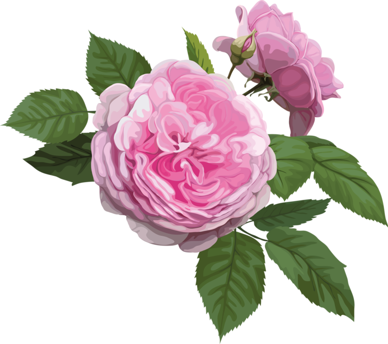 bouquet_of_pink_roses (10).png