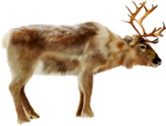 MRD_SnowyDreams-painted raindeer (3).png