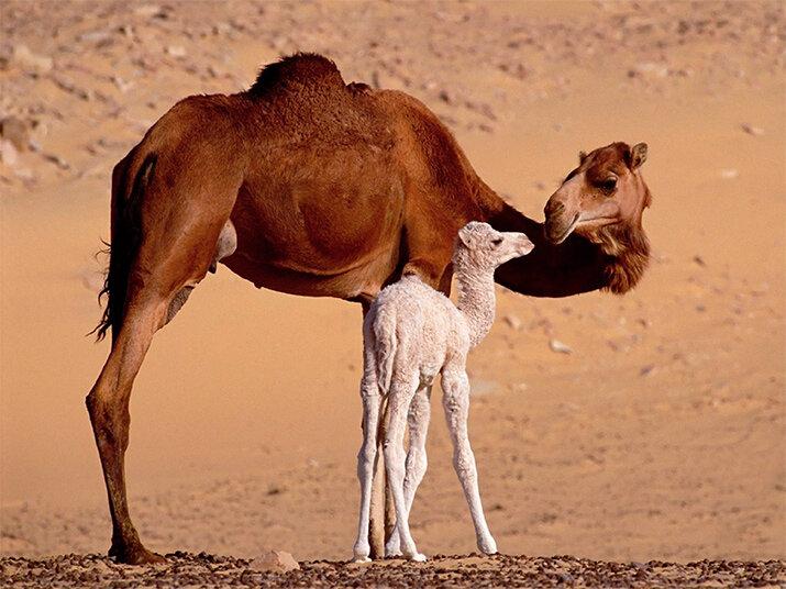 материнская любовь и забота в животном мире