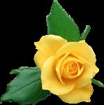 Holliewood_RoseIsARose_Rose20.png