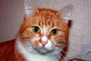 Задумчивый рыжий кот