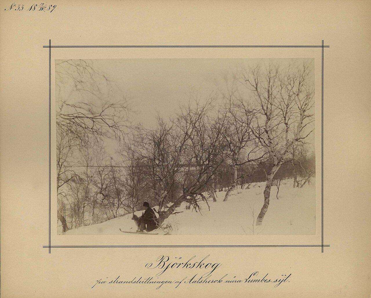 19.4.1889. Березовый лес на берегу возле Ламбовской