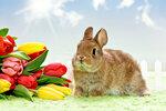 Baby Kaninchen mit Blumen
