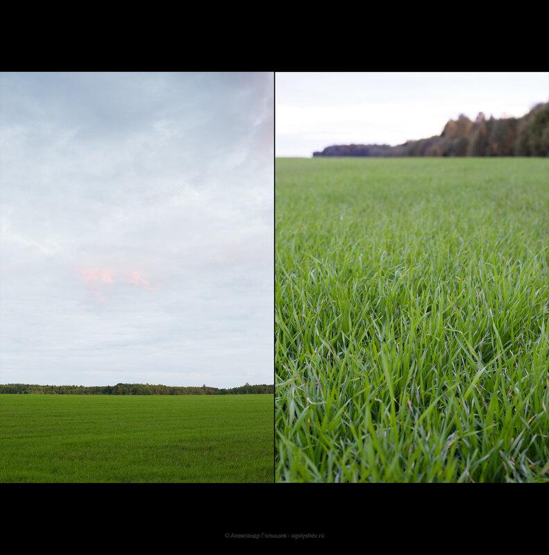 Зеленая трава осенью
