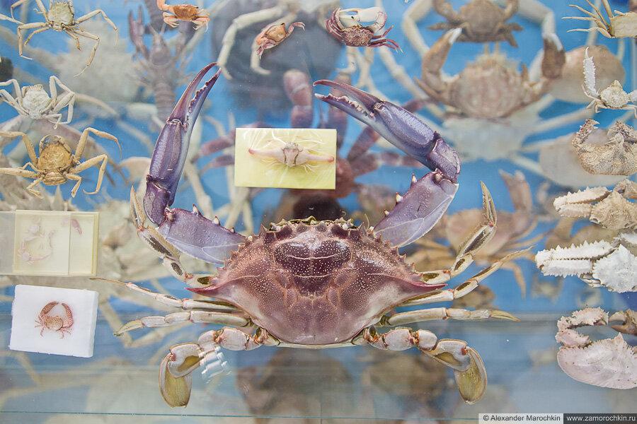 Крабы в музее ракушек Корфу