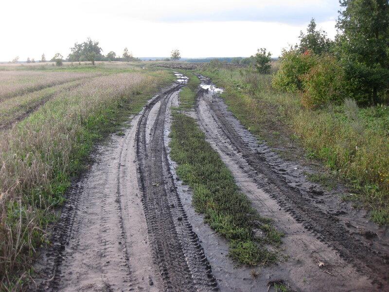 Дорога у Дубовой лесопосадки