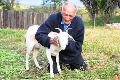 74-летний бразилец женится на козе