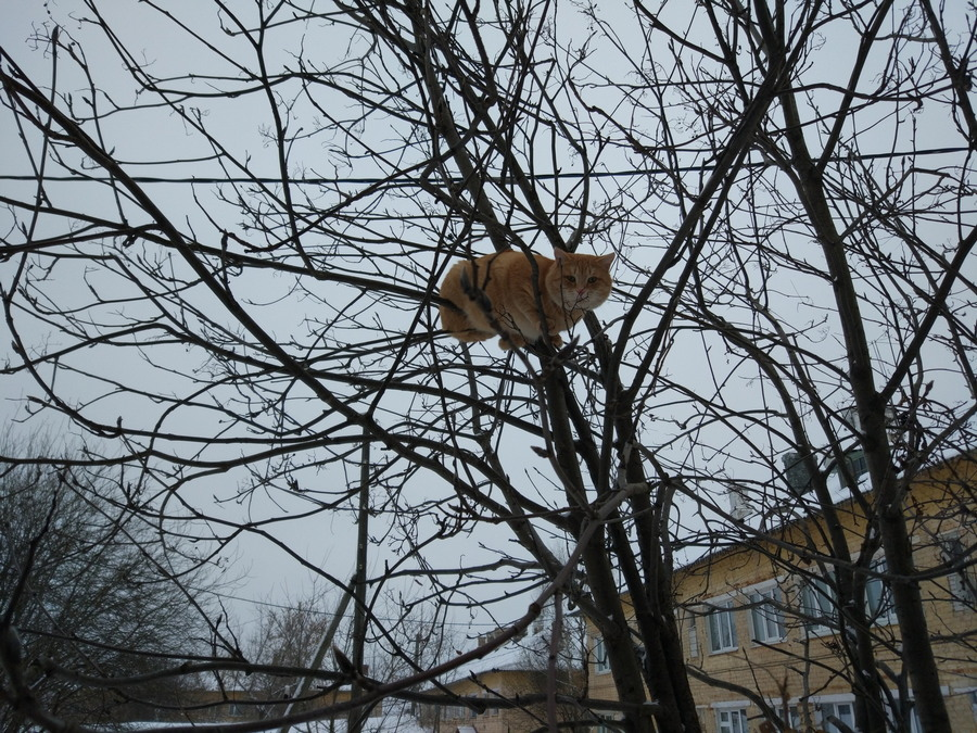 Подборка интересных и веселых картинок 04.01.18