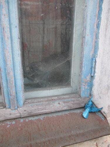 Синяя птица у окна