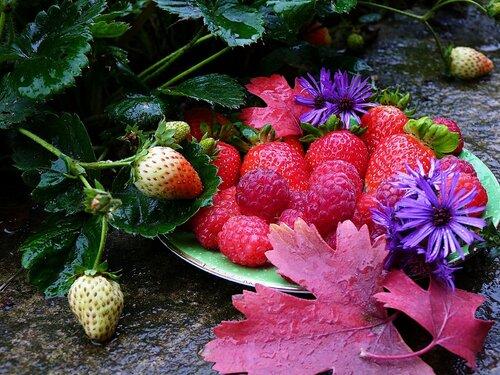 Октябрьский урожай