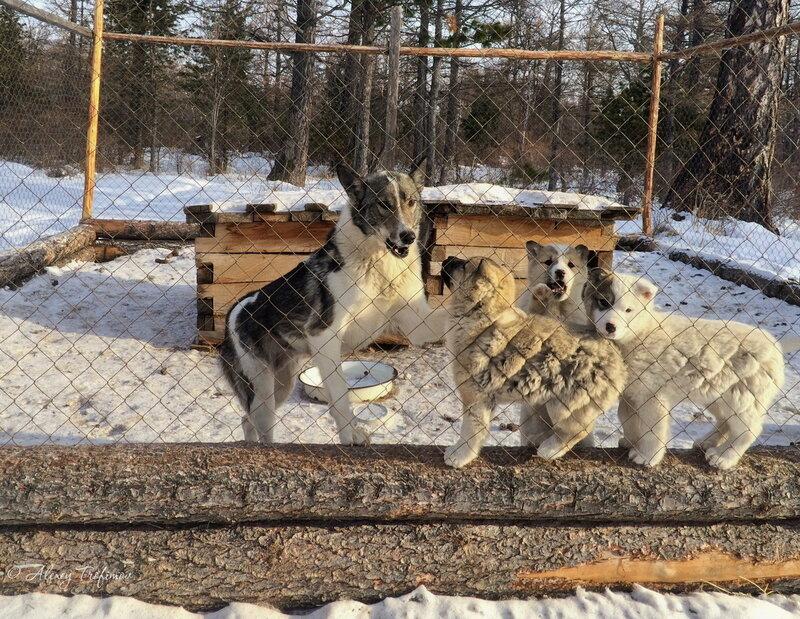 Baikal_2016_03_Puppy-Dog.jpg