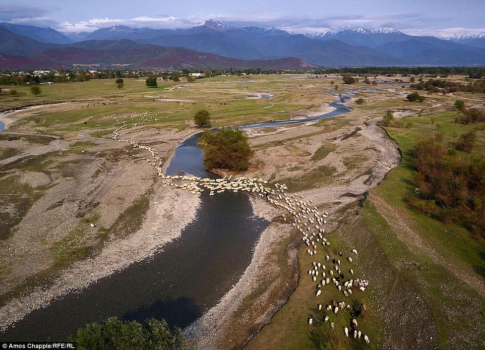 На этой равнине животные будут пастись, прежде чем отправиться обратно в горы.