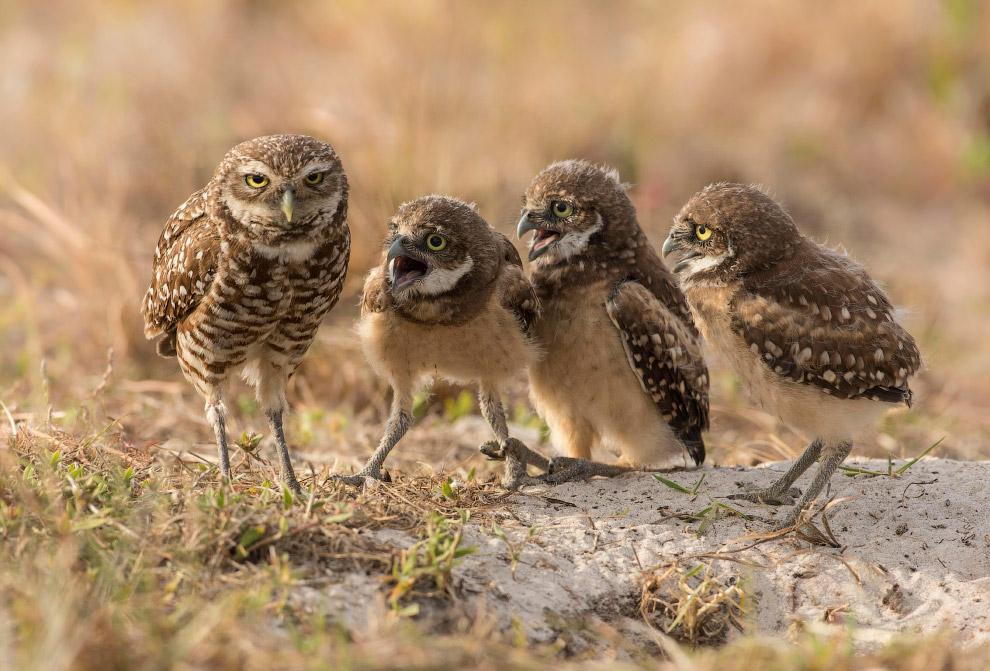 17. Косоглазие у крабов. (Фото Arkaprava Ghosh | Comedy Wildlife Photography Awards):