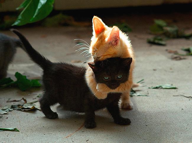 Кот-сказочник