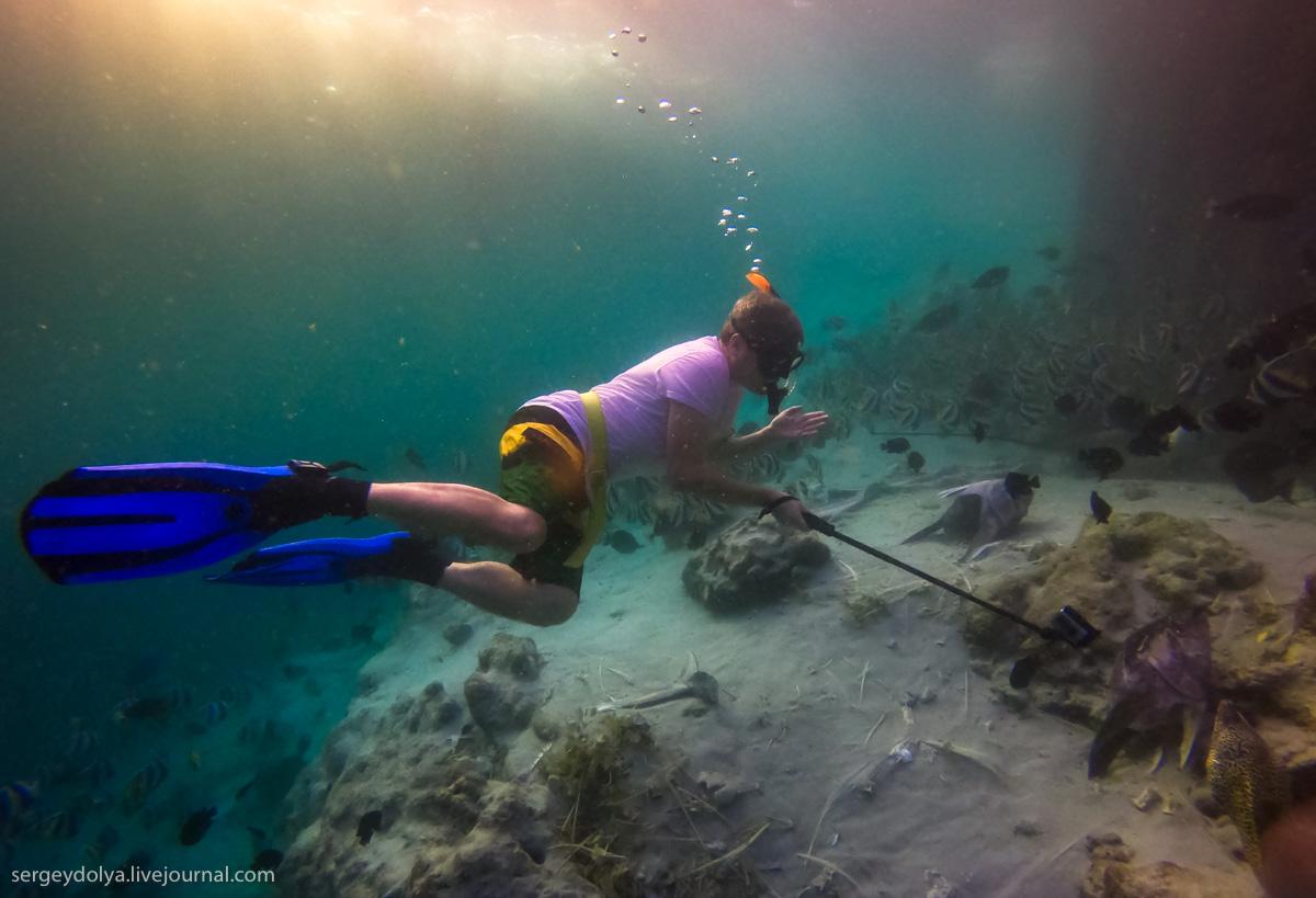 Стальные акваланги: как мы плавали с муренами (10 фото)