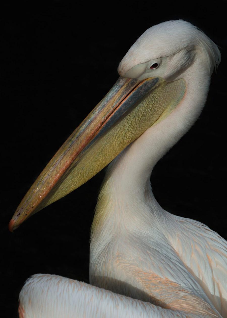 Majestic Birds Portraits