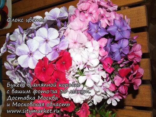 irisi-buketi-moskva-buket-floksi-dostavka