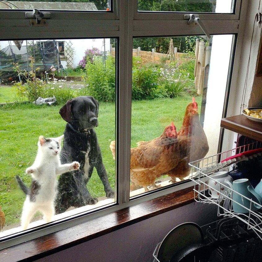 Хотелось бы знать, что  происходит на этой кухне?