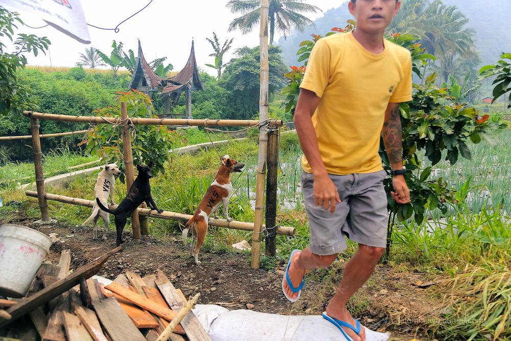 Индонезия. Суматранский автостоп и прочие радости.