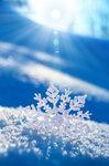 Snowflakes (1).jpg