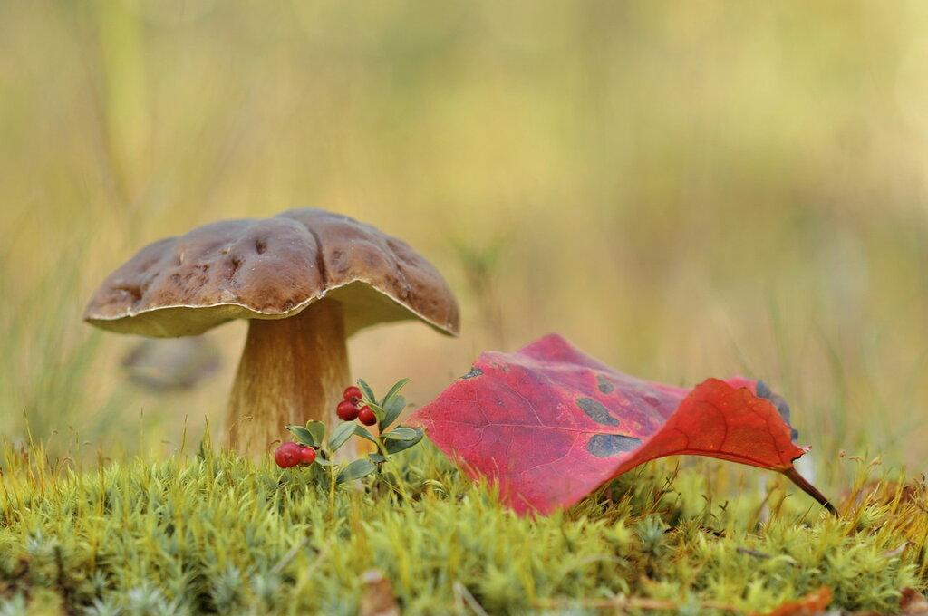 Осень..грибы...листья