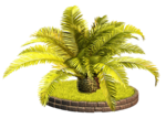 Palms  (21).png