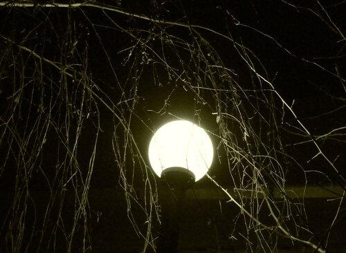 Ночная графика ветвей.