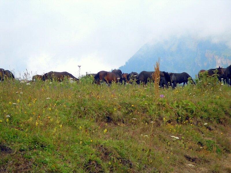 Поход, Бамбаки, Кавказ, фотографии Светланы Левады