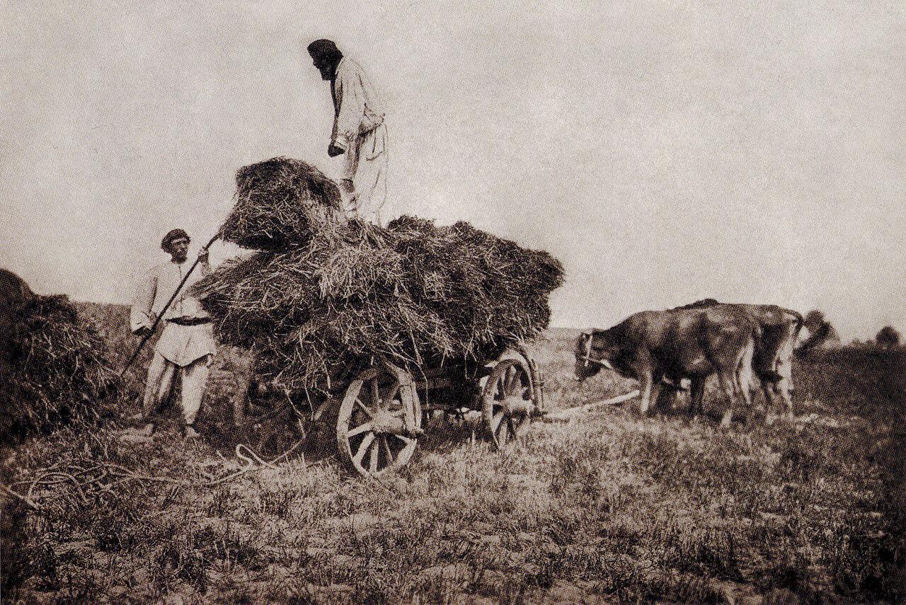 На поле во время сенокоса. Волынь. 1890 г.