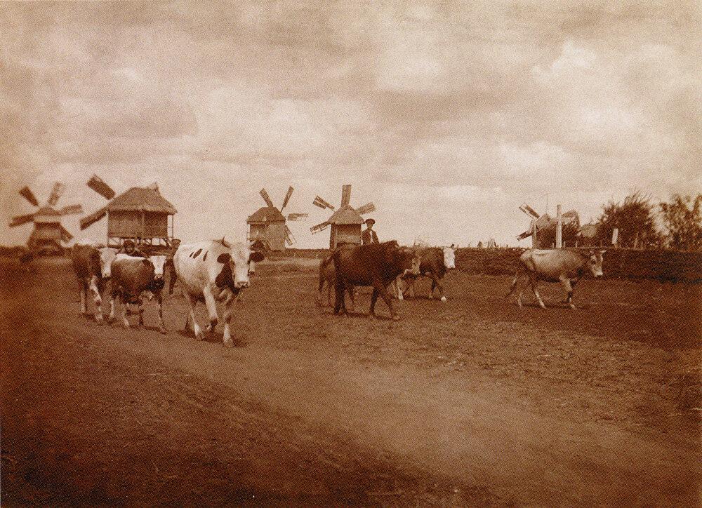 Сельский вид. Село Малая Павловка. 1912 г..