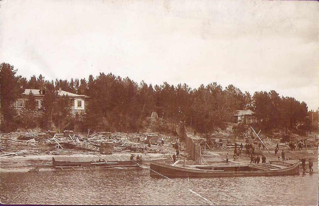 Берег реки Мсты. Лесозаготовки