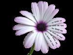 calguisloveflower1249.png