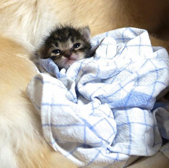 Отвергнутый мамой котенок нашел новую (8 фото)