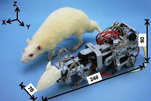 Угроза для лабораторных мышей