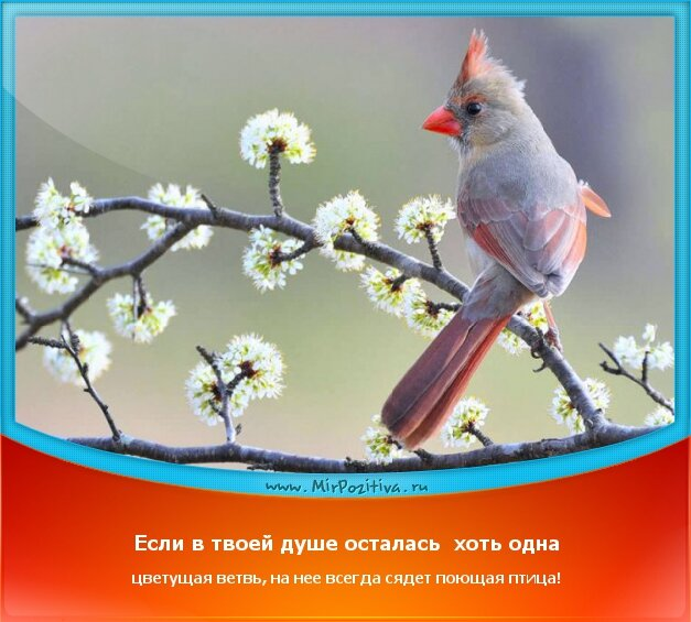 позитивчик дня - Если в твоей душе осталась хоть одна цветущая ветвь, на нее всегда сядет поющая птица!