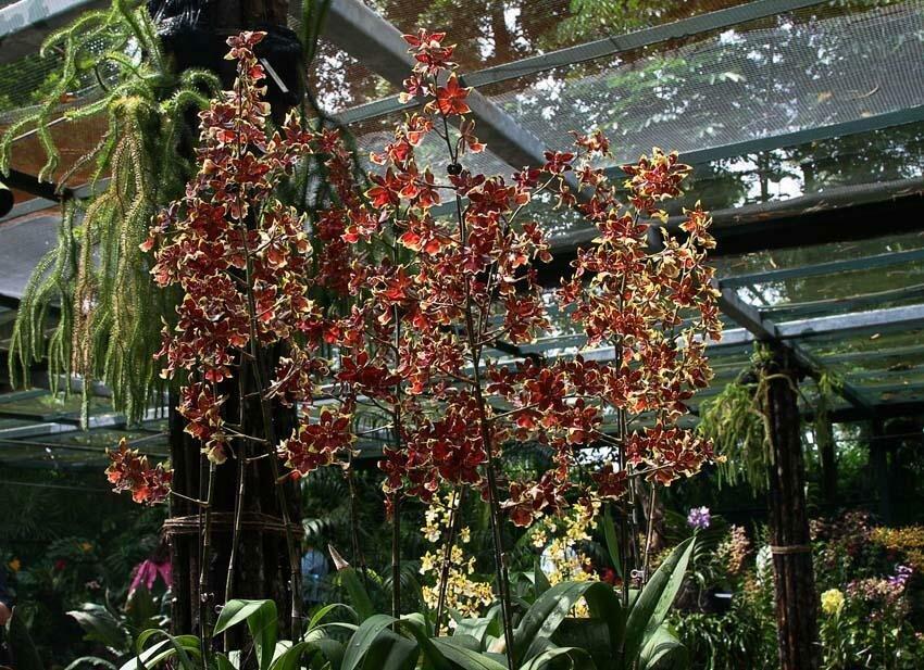 сад орхидей в сингапуре фото несение массы боевыми