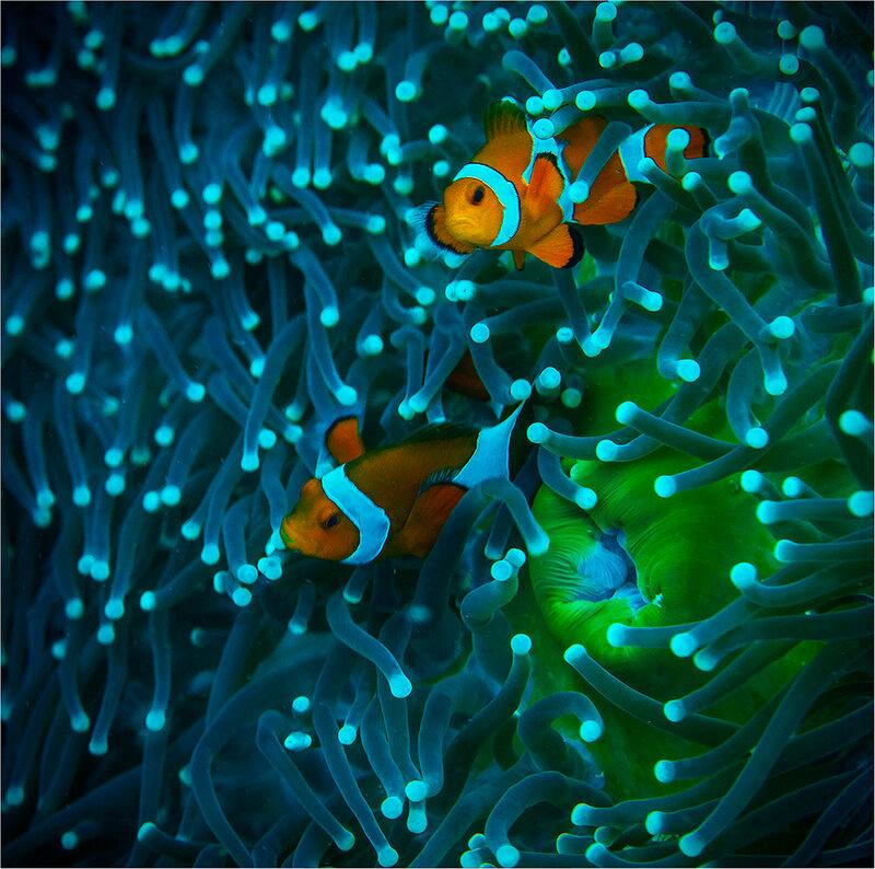 филиппинский аквариум