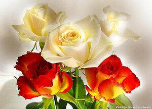 http://img-fotki.yandex.ru/get/9314/41473513.25a4/0_1448dc_5709c8ad_M.jpg