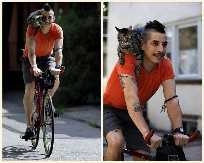 Кот на плече фото 2