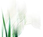 texturecamerontags_artisticVI3.png